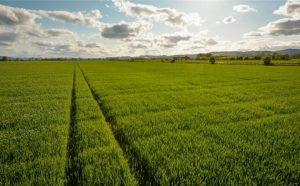 Rawes Farm, Longforgan